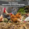 chicken-crap-composting-1-0f0ea35a303a8dc75e2d10e23186d64ca77ded6d
